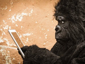 Gorilla with tablet 186293820
