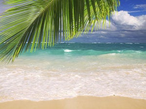 beautiful tropical beach with clear ocean . 166668700