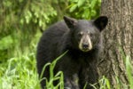 Don't confront black bears, do fight gender bias