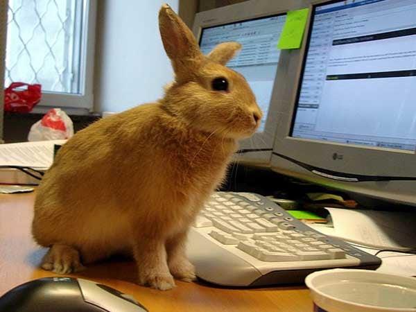 bunny computers desktop rabbit