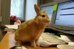 How to work with RabbitMQ in C#